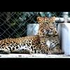 Allen Forest Zoo - Kanpur